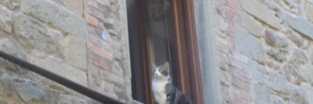 Kotek w toskańskim oknie