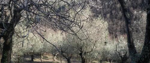 Vipy oraz produkcja oliwy z oliwek extravergine oraz wina