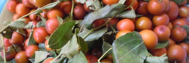 Marmellata di giuggiole – Dżem z jujuby
