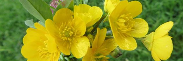 Polne kwiatki
