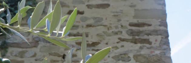 Calbi – film z toskańskiego miasteczka widma