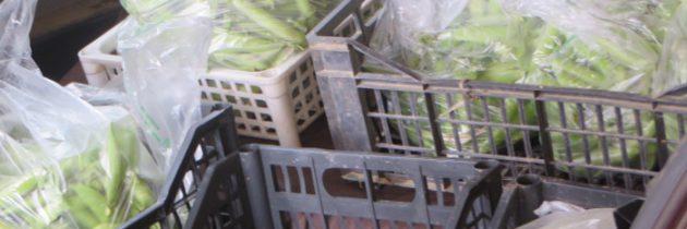 Groszek i truskawki
