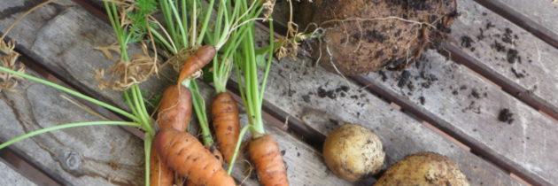 """Warzywa z własnego """"ogródka"""""""