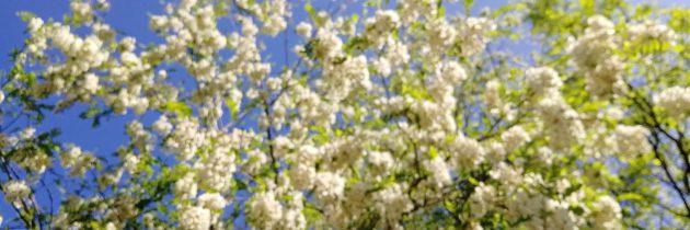 Wiosna z bliska