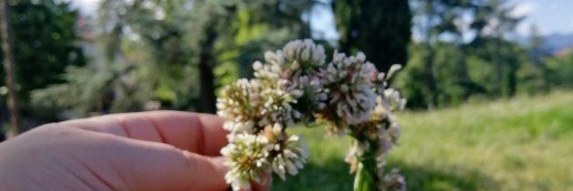 Kwiatowe wspomnienia z Polski