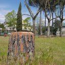 Nowe drzewka w ogrodzie na ulicy Tigli