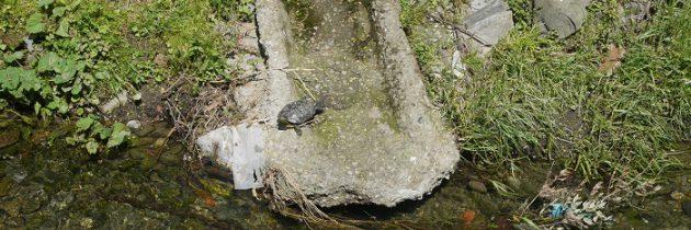 Ciepłe słońce kwietniowe i żółw nad rzeką