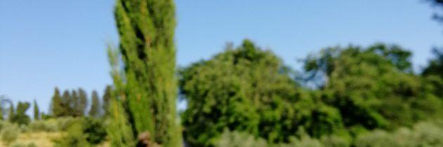 Trekking czerwcowy w słońcu