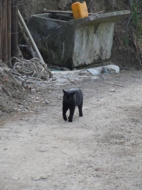 czarny_kot