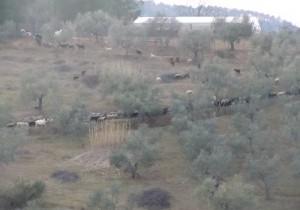 Wakacje w okolicach Pistoi: Forrottoli