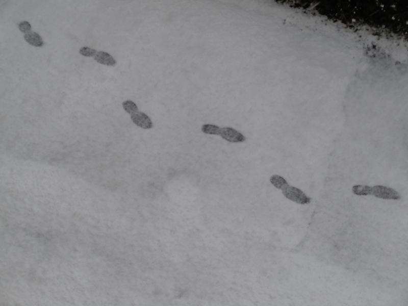 odciski_na_sniegu_moja_toskania