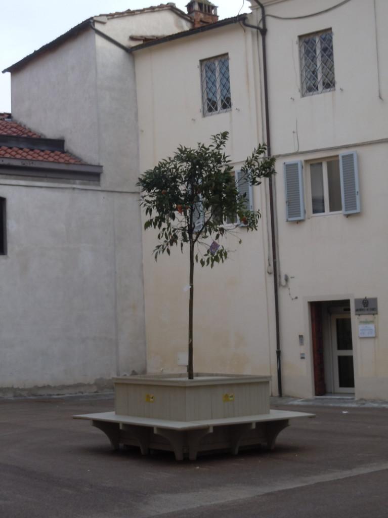 plac_scuole_nuove_pistoia_drzewo_pomaranczowe