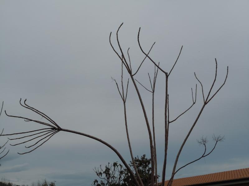 drzewo_z_reka_gello_moja_toskania