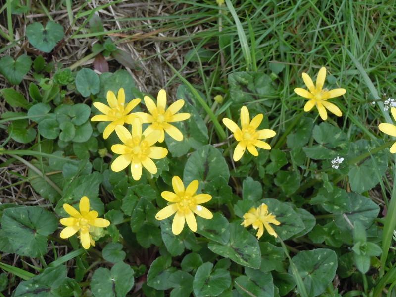 kwiatki_zolte_moja_toskania_gello