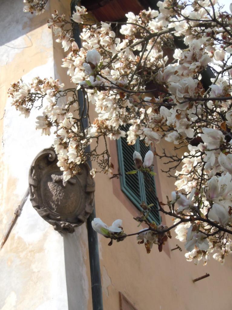 biale_drzewo_lukka_moja_toskania