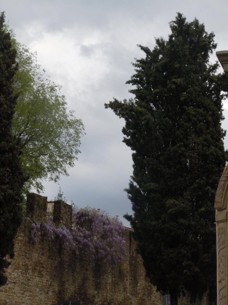 cyprys_i_fioletowe_kwiaty_florencja_moja_toskania