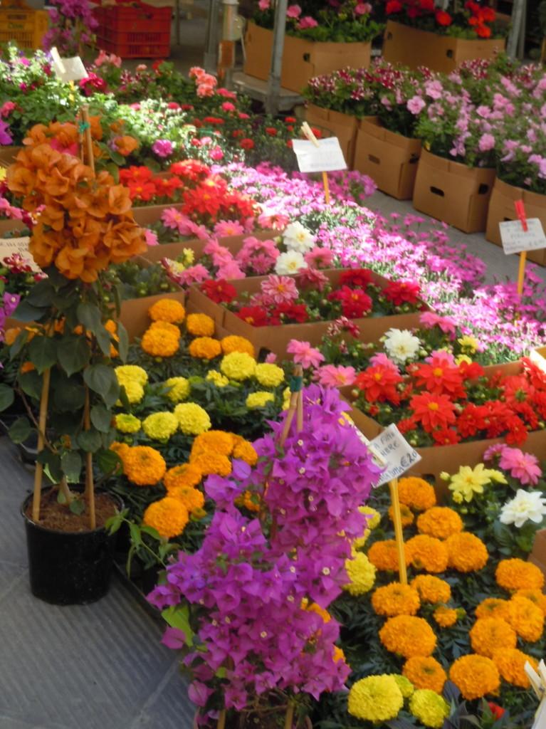 kolorowe_kwiaty_targ_pistoia_moja_toskania