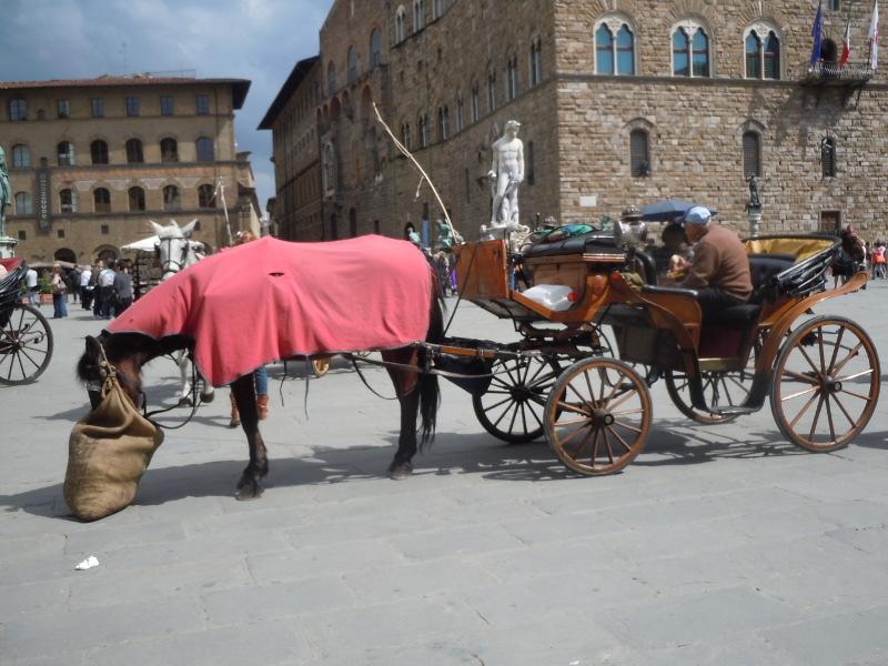kon_je_siano_florencja_moja_toskania