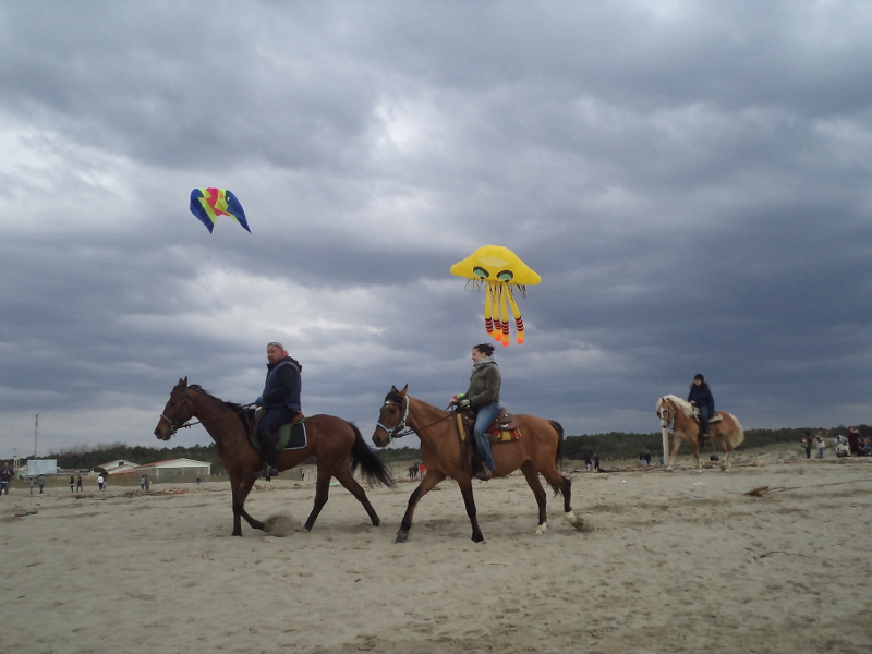 konie_torre_del_lago_moja_toskania
