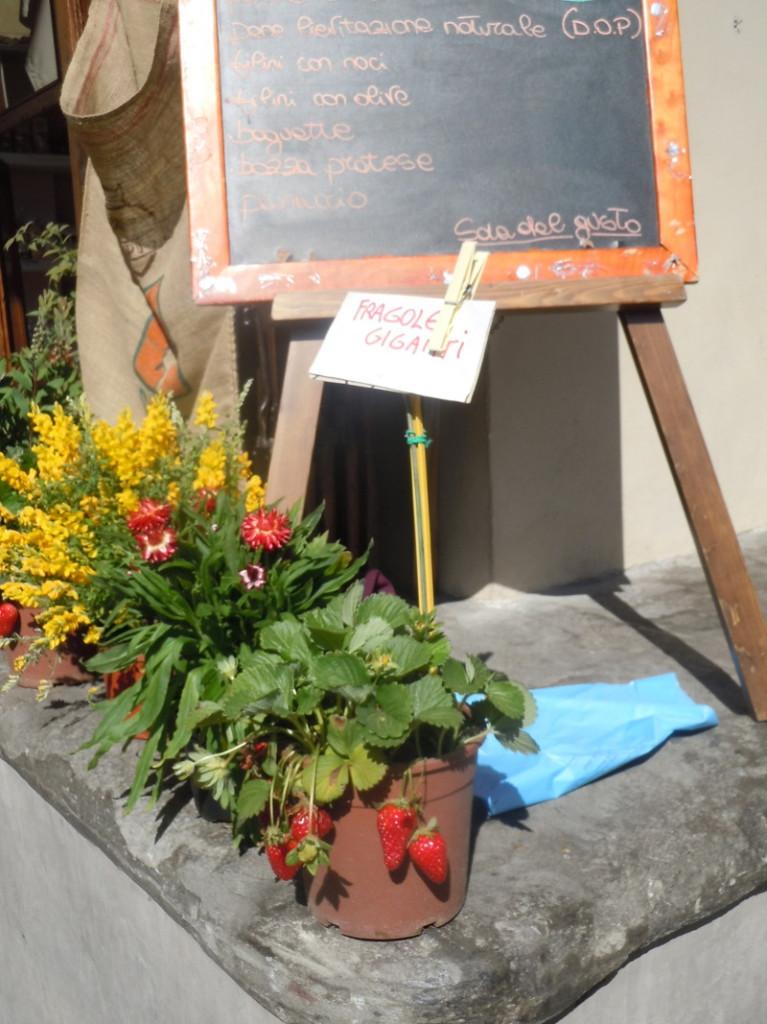 kwiaty_i_truskawki_targ_pistoia_moja_toskania