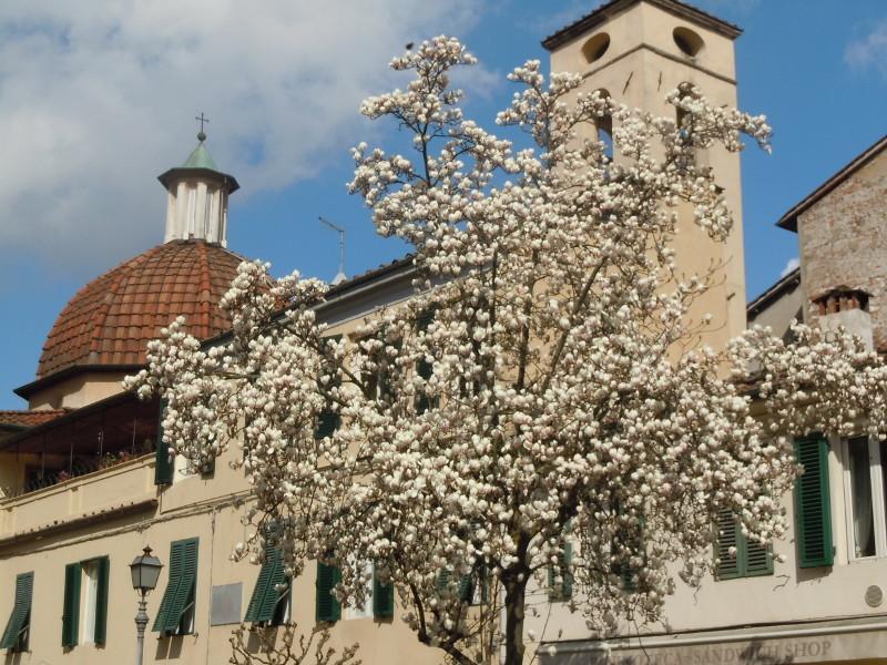 lukka_biale_kwiaty_moja_toskania