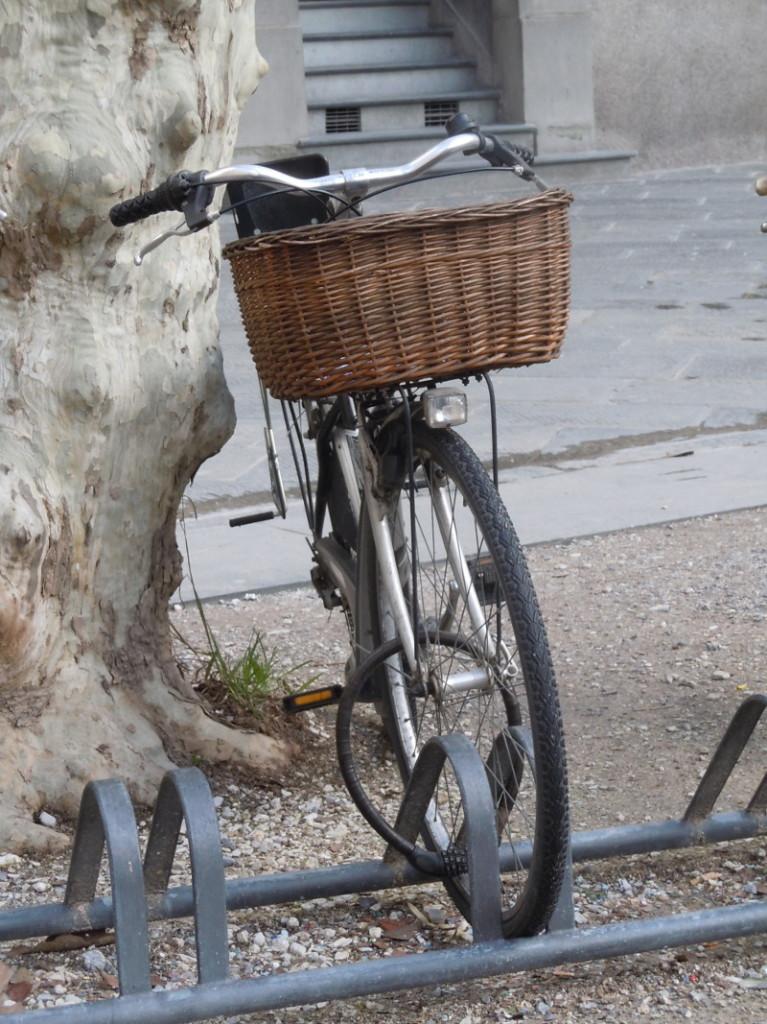 rower_przy_drzewie_lukka_moja_toskania