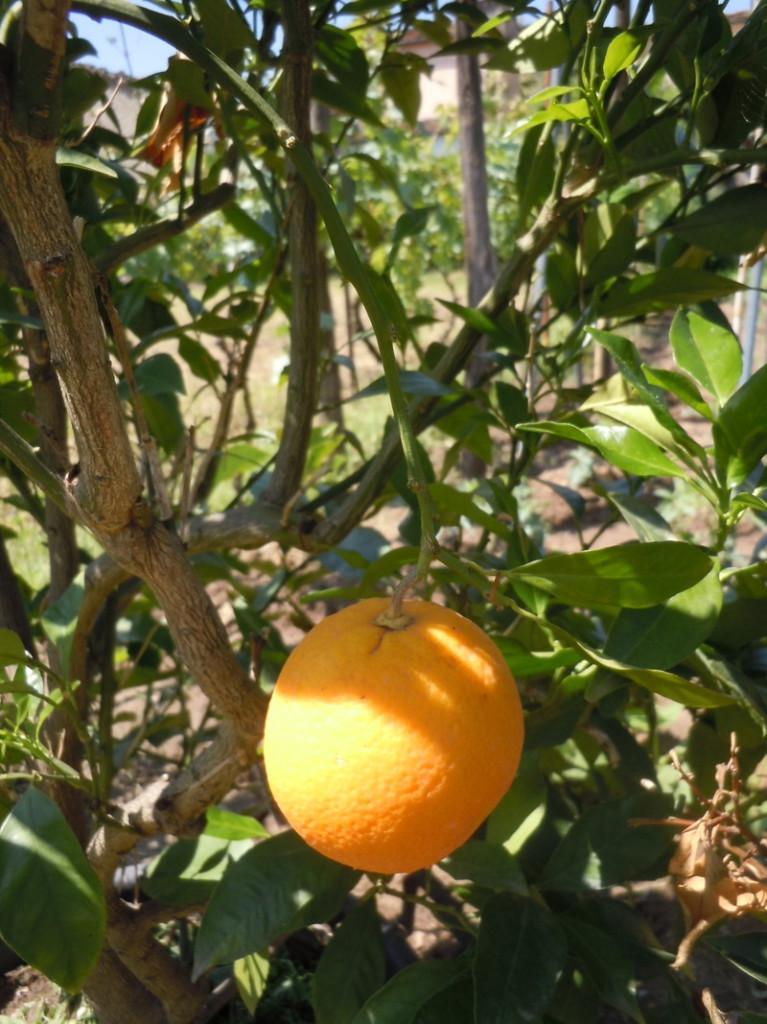 pomarancz_moja_zielona_toskania