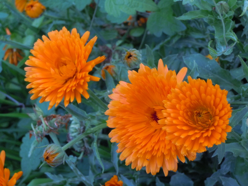 pomaranczowe_kwaitki_moja_toskania