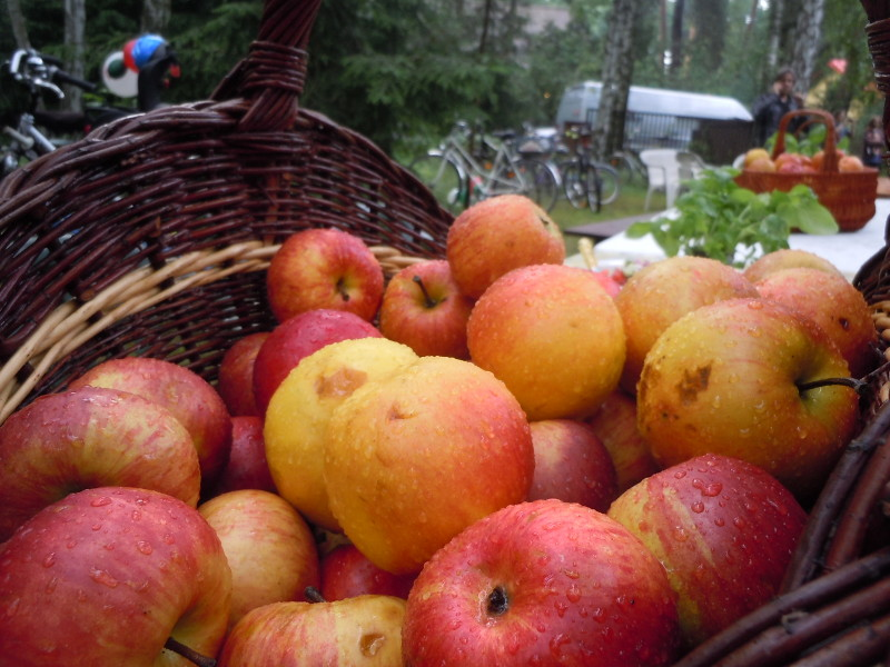 jablka_moja_toskania_wloskie_popoludnie_podkowa_lesna