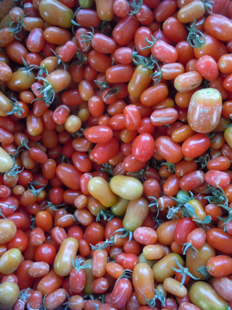 pomidorki_czeresniowe_moja_toskania_targ_eko_olmi