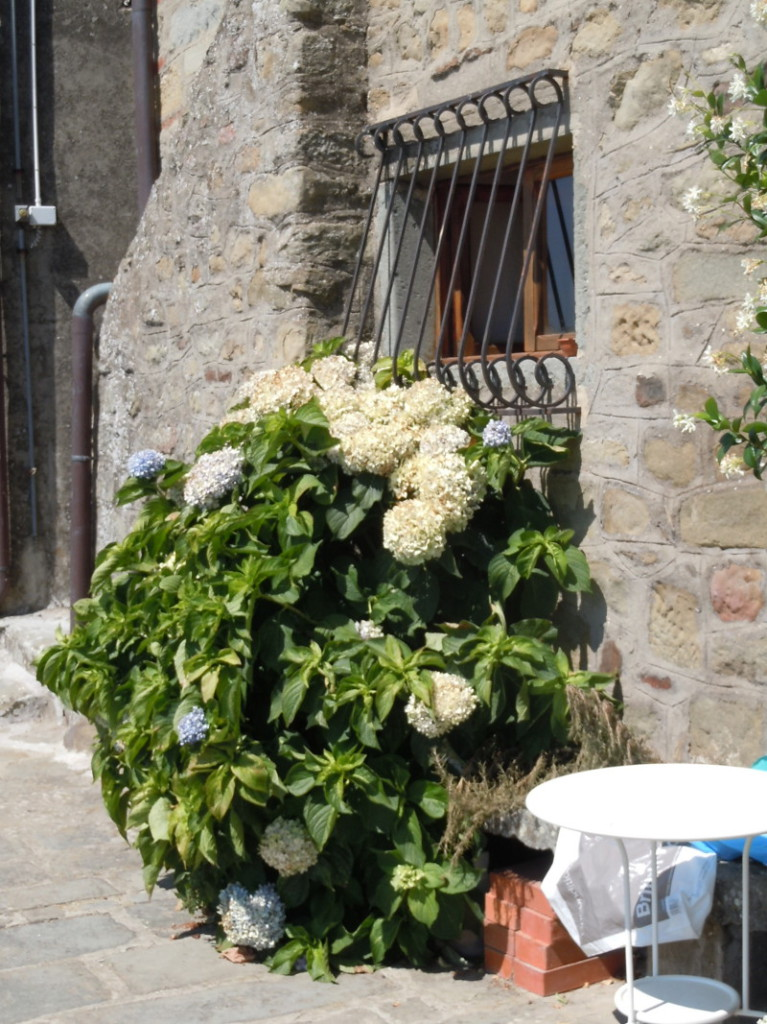 biale_kwiaty_w_vellano_moja_toskania