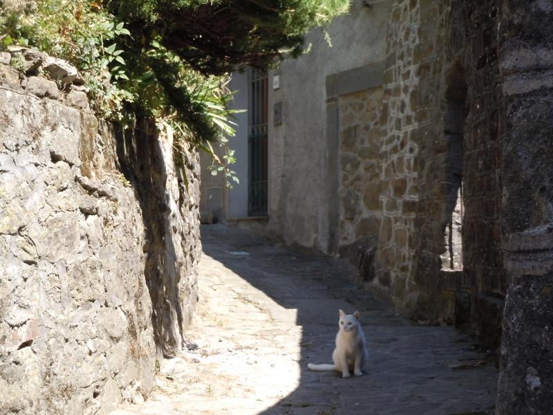 bialy_kot_w_vellano_moja_toskania