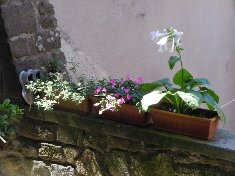 buty_i_kwiaty_vellano_moja_toskania