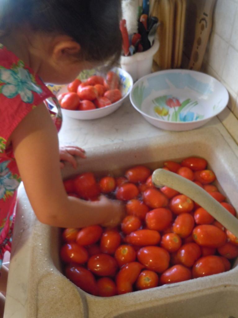 mycie_pomidorow_san_marzano_moja_toskania