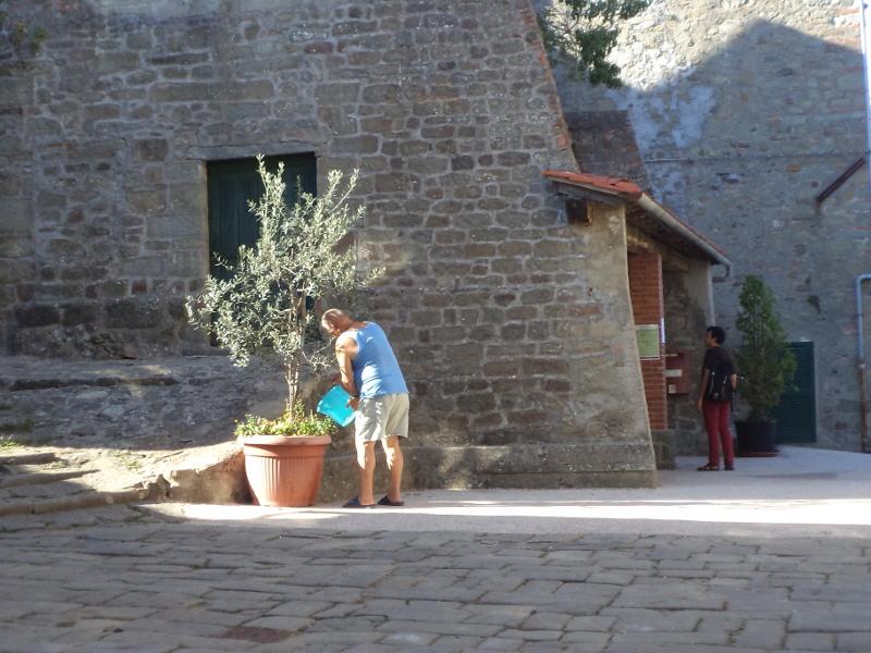 podlewanie_drzewka_oliwnego_na_placu_stiappa_moja_toskania