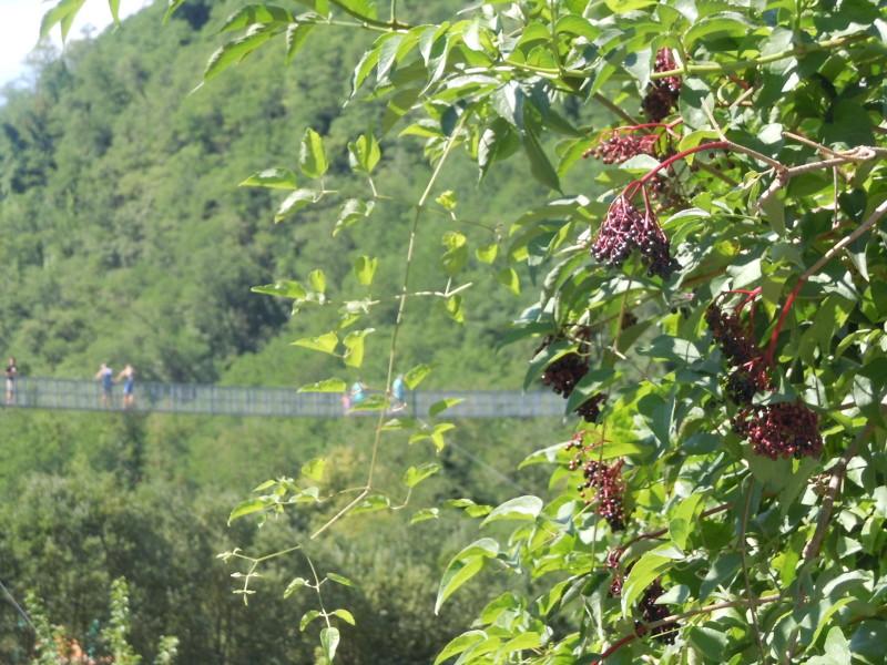 podwieszony_most_i_dzikie_owoce_moja_toskania