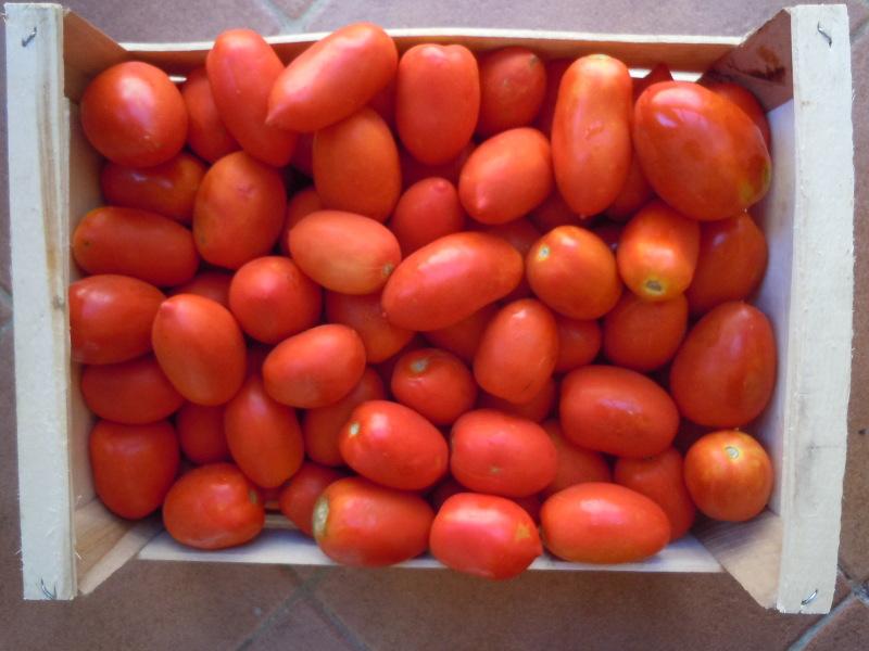 pomidory_san_marzano_moja_toskania