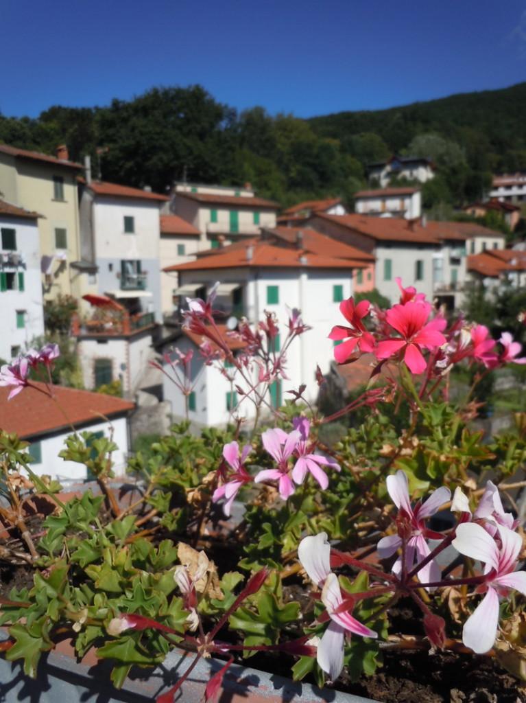 san_marcello_kwiaty_moja_toskania