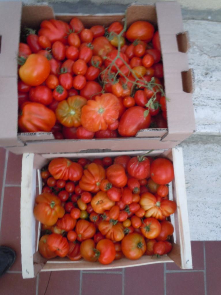 skrzynki_z_pomidorami_moja_toskania