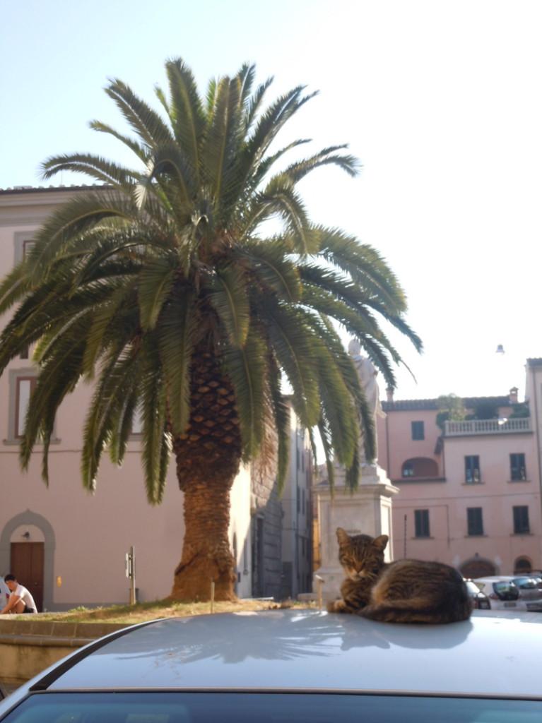 spiacy_kot_i_palma_pistoia_moja_toskania