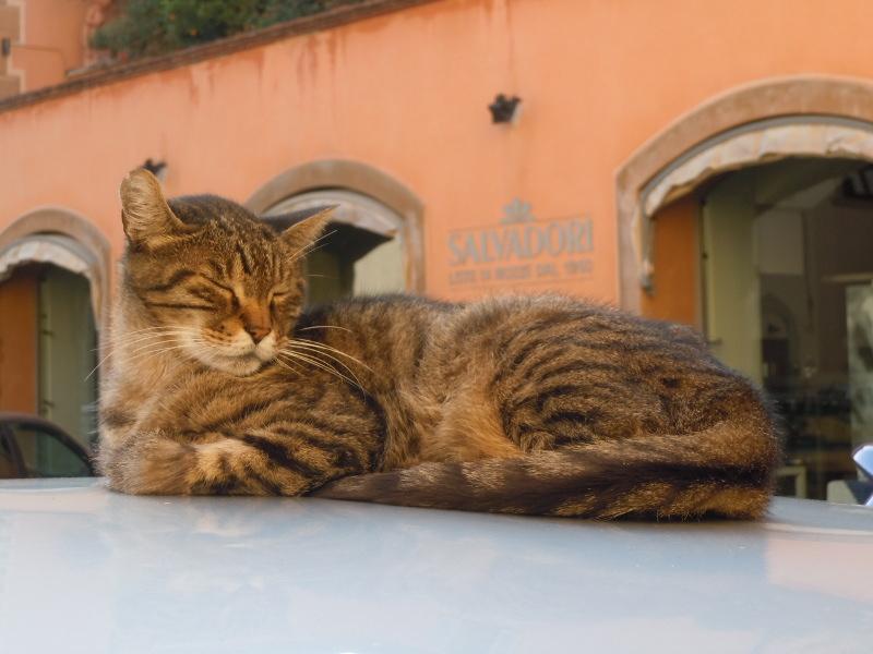 spiacy_kot_pistoia_moja_toskania