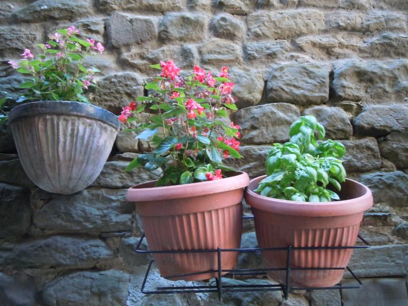 wiszace_kwiaty_i_bazylia_moja_toskania_vellano