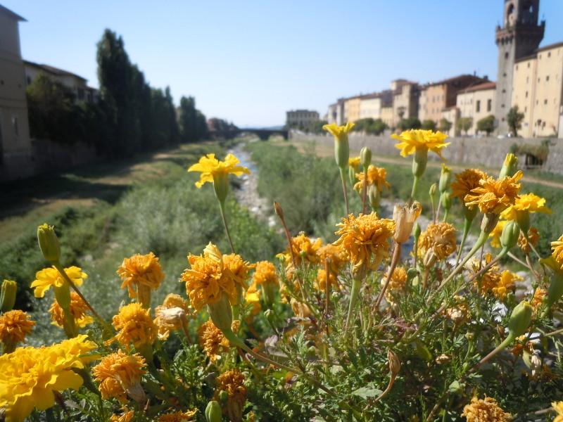 zolte_kwiaty_pescia_rzeka_moja_toskania