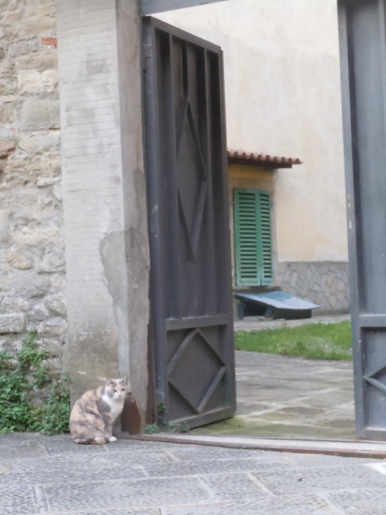 kot_w_marradi_moja_toskania