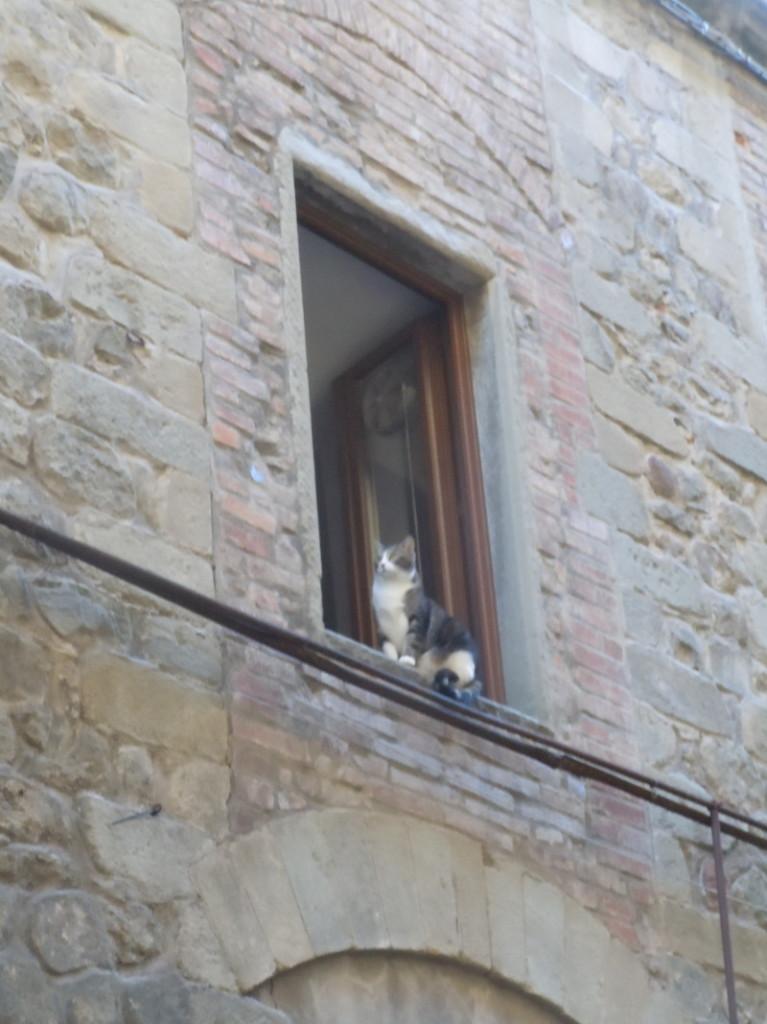 kotek_w_oknie_moja_toskania