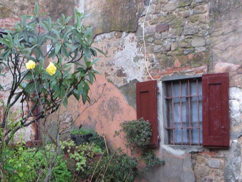 kwiatek_przy_wiejskim_Domu_costa_uzzano_moja_Toskania