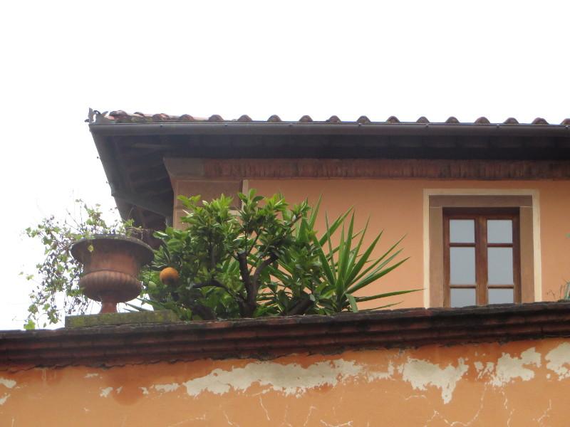 drzewko_cytrynowe_moja_toskania