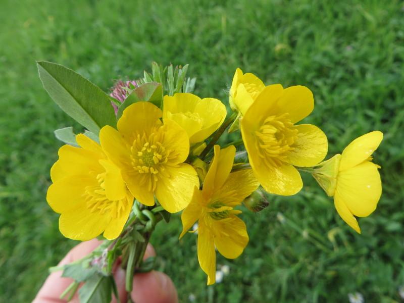 bukiecik_polnych_kwiatkow_moja_toskania