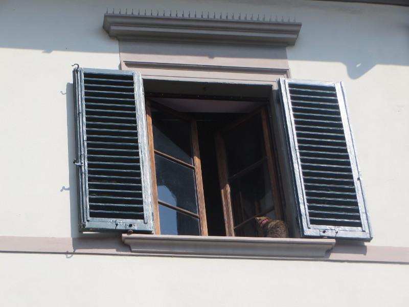 kot_w_oknie_moja_toskania