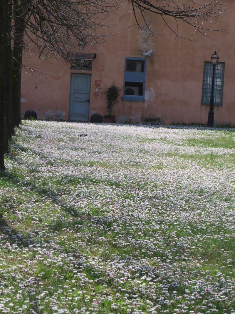 kwiaty_w_parku_pistoia_moja_toskania